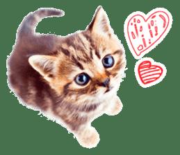 Cat Photo Stickers 07 sticker #15892200