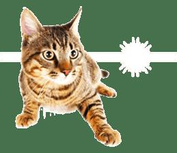 Cat Photo Stickers 07 sticker #15892201