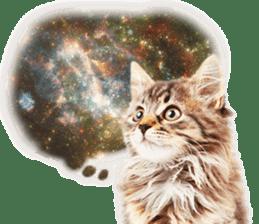 Cat Photo Stickers 07 sticker #15892203