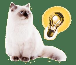 Cat Photo Stickers 07 sticker #15892208