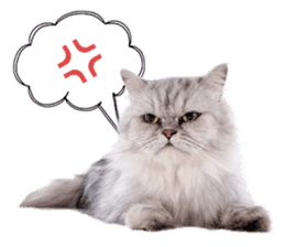 Cat Photo Stickers 07 sticker #15892210