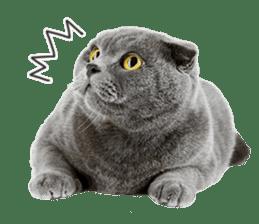 Cat Photo Stickers 07 sticker #15892211