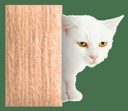 Cat Photo Stickers 07 sticker #15892213