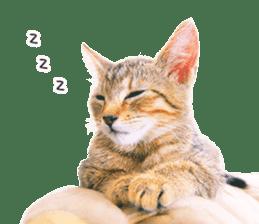 Cat Photo Stickers 07 sticker #15892215