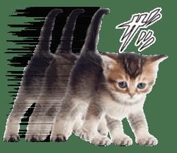 Cat Photo Stickers 07 sticker #15892216