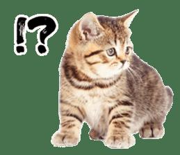 Cat Photo Stickers 07 sticker #15892218