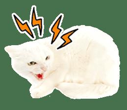 Cat Photo Stickers 07 sticker #15892219