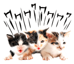 Cat Photo Stickers 07 sticker #15892223