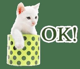 Cat Photo Stickers 07 sticker #15892224