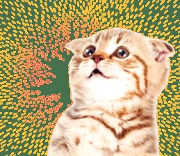 Cat Photo Stickers 07 sticker #15892226