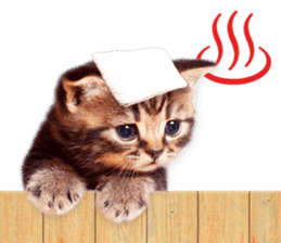 Cat Photo Stickers 07 sticker #15892227