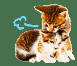 Cat Photo Stickers 07 sticker #15892229
