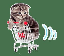 Cat Photo Stickers 07 sticker #15892230