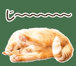 Cat Photo Stickers 07 sticker #15892231