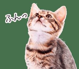 Cat Photo Stickers 07 sticker #15892232