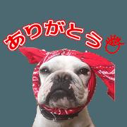 สติ๊กเกอร์ไลน์ YHsama's Sticker
