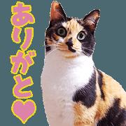 สติ๊กเกอร์ไลน์ TOsama's Sticker