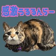 สติ๊กเกอร์ไลน์ TOsama's Sticker vol.2
