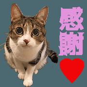 สติ๊กเกอร์ไลน์ TOsama's Sticker vol.3
