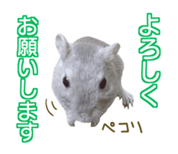 Hamster. No, this is jird's. sticker #15933508