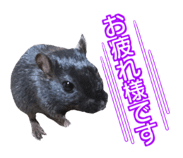 Hamster. No, this is jird's. sticker #15933512