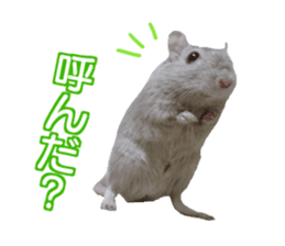 Hamster. No, this is jird's. sticker #15933514