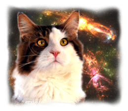 Cat Photo Stickers 08 sticker #15937028