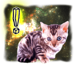 Cat Photo Stickers 08 sticker #15937030