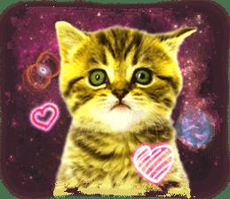 Cat Photo Stickers 08 sticker #15937036