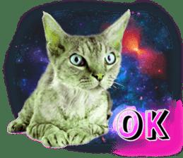 Cat Photo Stickers 08 sticker #15937046