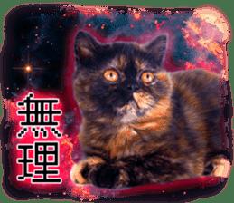 Cat Photo Stickers 08 sticker #15937048