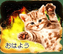 Cat Photo Stickers 08 sticker #15937056