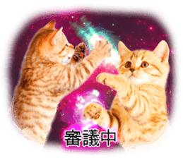 Cat Photo Stickers 08 sticker #15937057