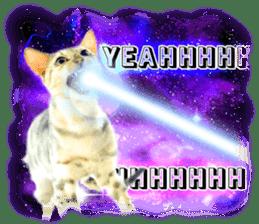Cat Photo Stickers 08 sticker #15937058