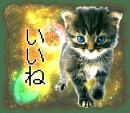 Cat Photo Stickers 08 sticker #15937060