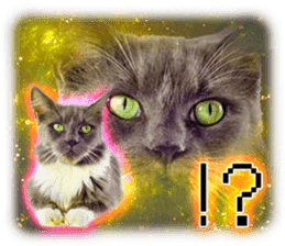 Cat Photo Stickers 08 sticker #15937062