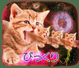 Cat Photo Stickers 08 sticker #15937064