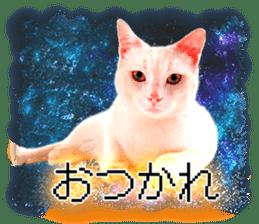 Cat Photo Stickers 08 sticker #15937067