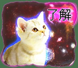 Cat Photo Stickers 08 sticker #15937069