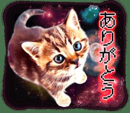 Cat Photo Stickers 08 sticker #15937071