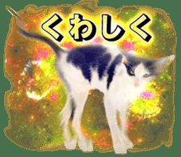 Cat Photo Stickers 08 sticker #15937074
