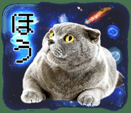 Cat Photo Stickers 08 sticker #15937075