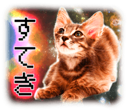 Cat Photo Stickers 08 sticker #15937076