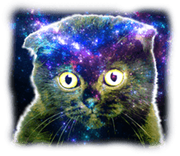 Cat Photo Stickers 08 sticker #15937081