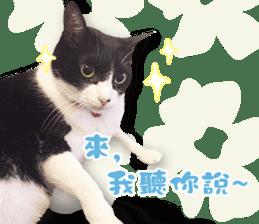 Angel's beauty cat-Bear&Wan sticker #15946378
