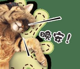 Angel's beauty cat-Bear&Wan sticker #15946379