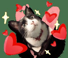 Angel's beauty cat-Bear&Wan sticker #15946381