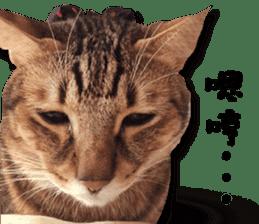 Angel's beauty cat-Bear&Wan sticker #15946382