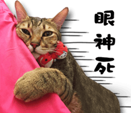 Angel's beauty cat-Bear&Wan sticker #15946384