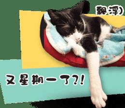 Angel's beauty cat-Bear&Wan sticker #15946386